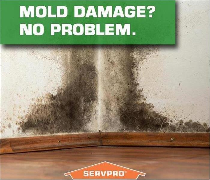 Mold Damage Safety Tips