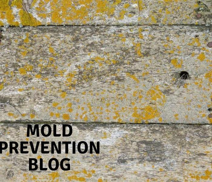 Mold Remediation Moldy Food