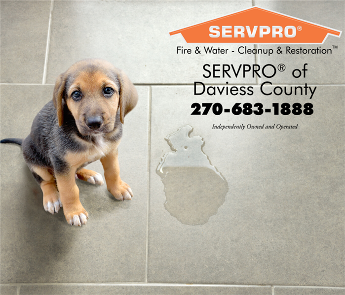 Tile floor with clear stain. Beagle puppy looking sad beside it. SERVPRO logo in corner