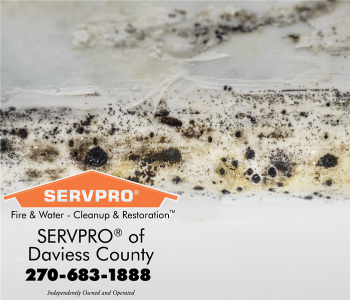 White wall with black mold all over it. SERVPRO logo in the corner of photo